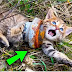 A young man found a cat trapped in an iron pipe, watch what he did
