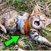 شاهد شاب وجد قطة مسكينة تتألم في الطريق والصدمة عندما إقترب منها