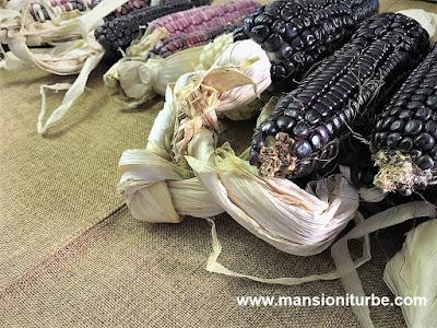 Native Michoacan Corn