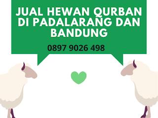 Jual Hewan Qurban Domba di Padalarang, Bandung Barat
