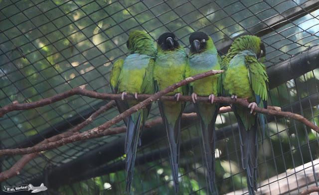 Parque das Aves, Foz do Iguaçu