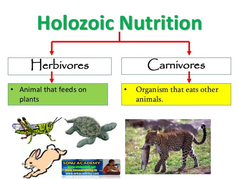 mode of nutrition in protozoa pdf