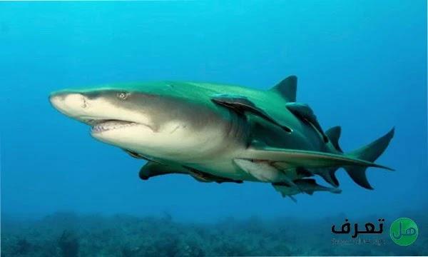 انواع سمك القرش