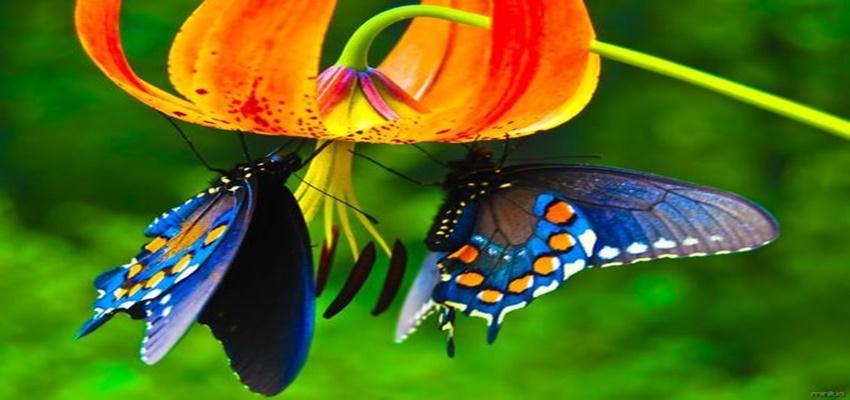 Posição sexual borboleta tem de experimentar