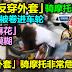 女子反穿外套骑摩托,她手臂被卷进车轮…「扭成麻花」血肉模糊。「反穿外套」骑摩托非常危险