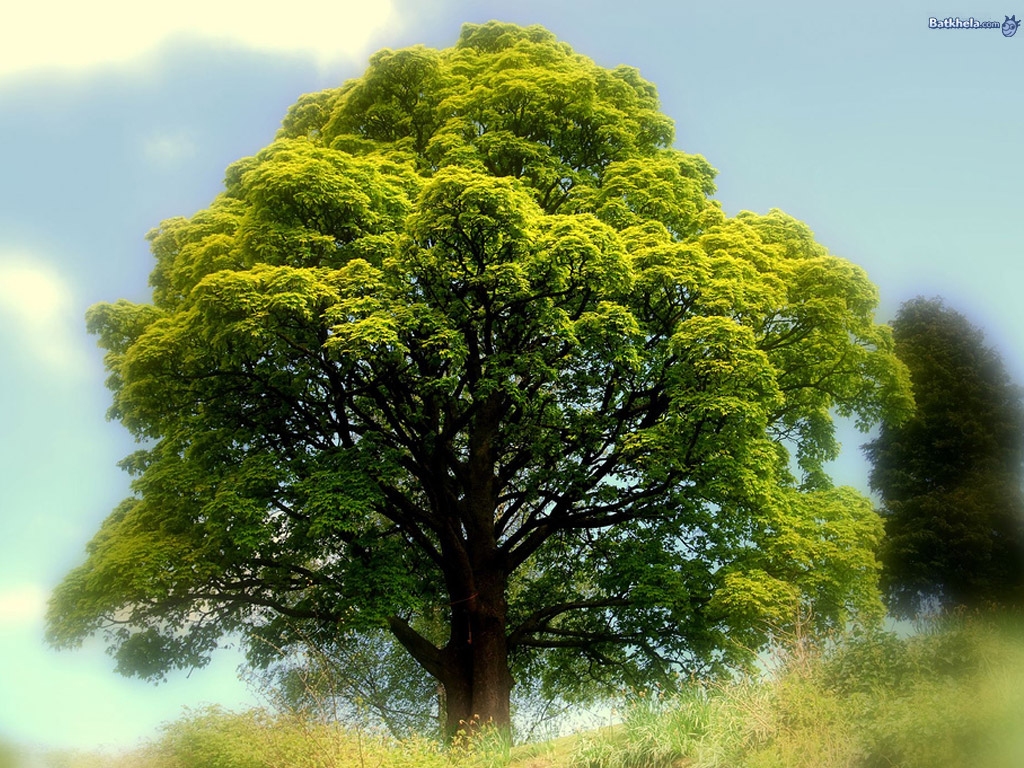 бесплатно широкоформатные красивое дерево фото рисунок того