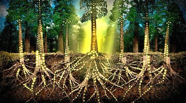12 Sự thật đáng kinh ngạc chứng minh thực vật cũng giao tiếp và có cảm giác