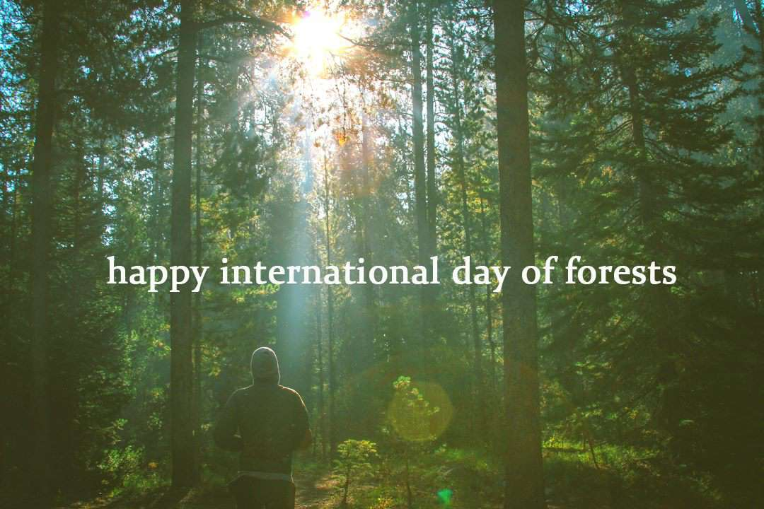 International Day of Forests Wishes