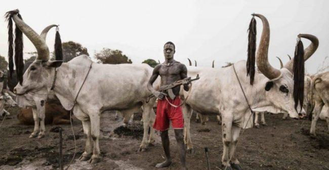 Suspected Herdsmen killed 7 in Kogi