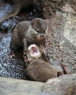 Otter joke is not funny