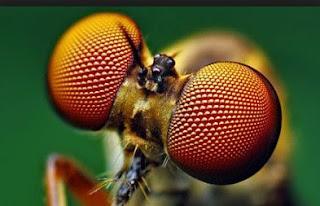 Ojos de insectos