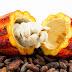 CACAU-CABRUCA - um modelo sustentável de agricultura tropical