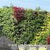 Jasa Pembuatan Vertical Garden dan Harga Pasang Terbaru di Brebes
