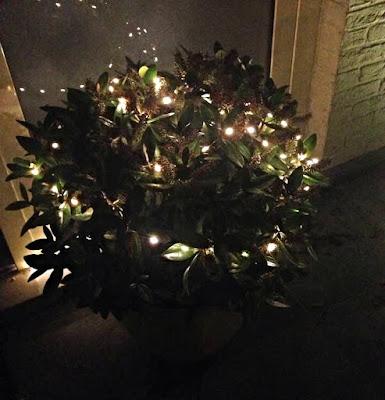Action - lichtgevende draad - eigen voordeur met plant