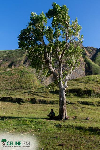 mt igcoron duhat tree