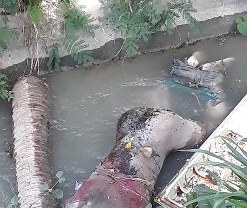 VICENTE NOBLE: Encuentran hombre muerto en estado de descomposición en canal de riego.