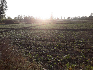 Morning view in fields look great.