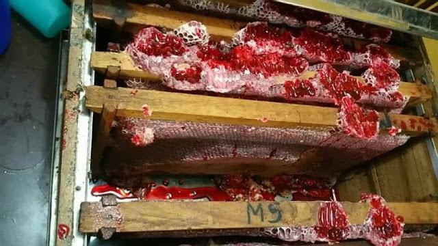 Το σπάνιο κόκκινο μέλι που μοιάζει με αίμα