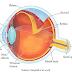 Materi Cahaya dan Optik Part 7 - Bagian Mata & Mekanisme Kerjanya