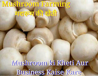 mushroom farming in hindi language