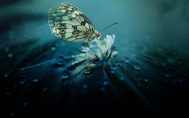 Gambar kupu kupu keren