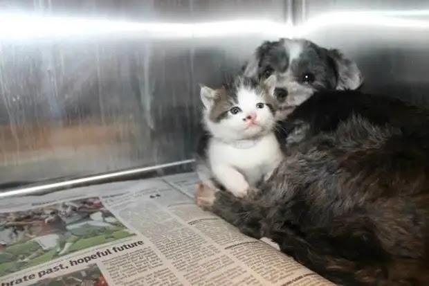 История о том, как собака стала родной матерью котенку, попавшему в беду
