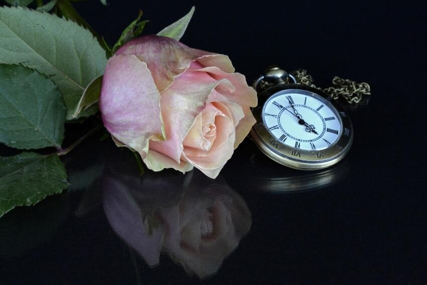 rosa, relogio