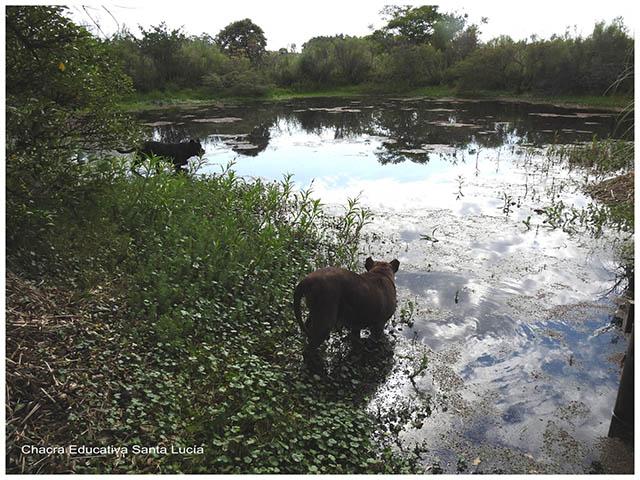 Los perros en el tajamar - Chacra Educativa Santa Lucía