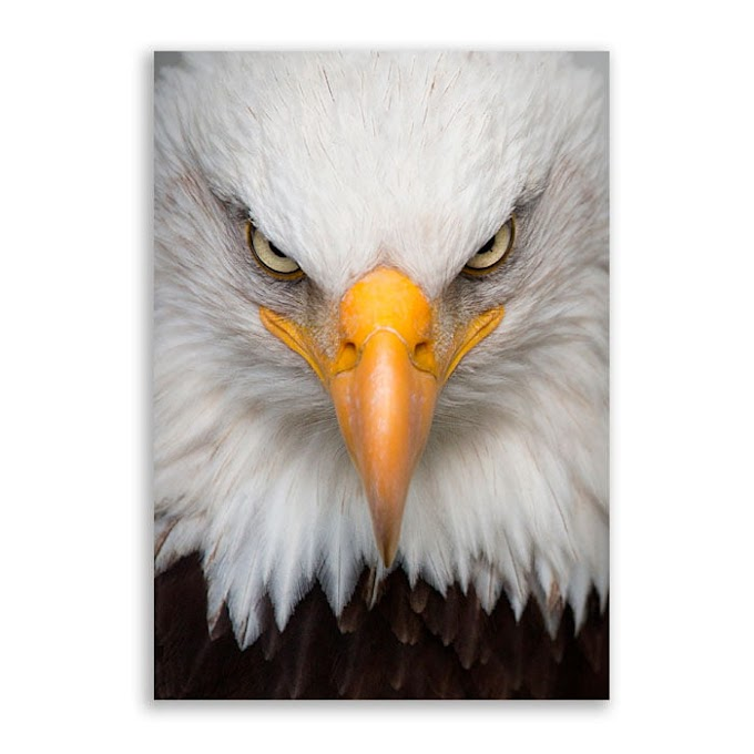 Você não é uma Águia, você é só uma Galinha de Asa Delta