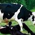 Ήξερες εσύ ότι υπάρχουν 9 διαφορετικά είδη γάλατος;