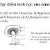 SLIDE TIỂU LUẬN - Kỹ thuật nuôi trồng nấm mỡ