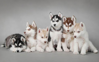 خلفيات كلاب