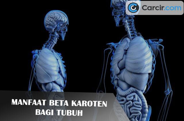 Manfaat Beta Karoten Bagi Tubuh, carcir