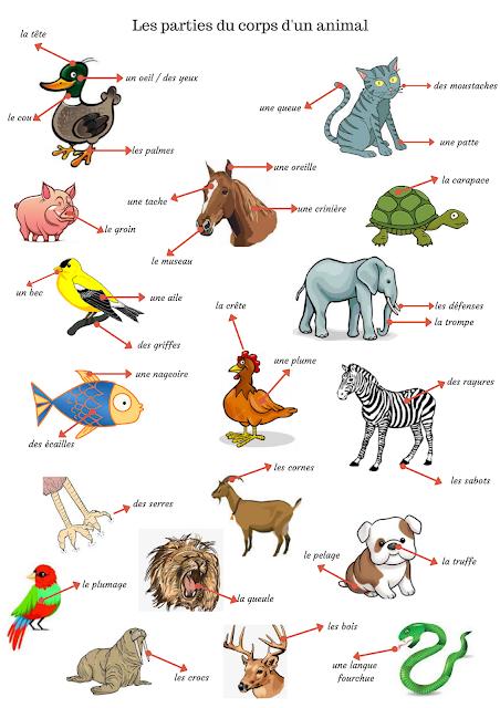 Opisywanie zwierząt - słownictwo 3 - Francuski przy kawie