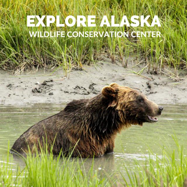 Alaska Wildlife