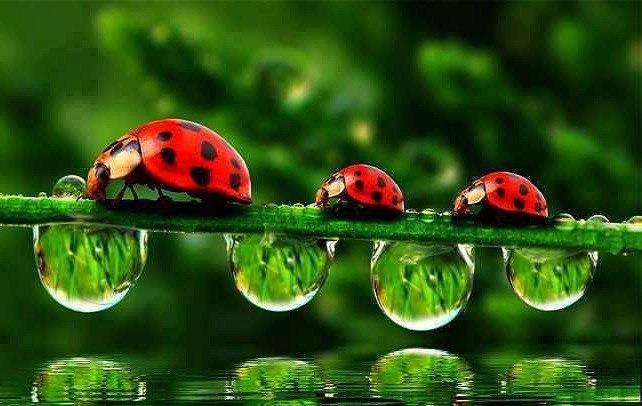 Fondos De Escritorio De Catarinas, Mariquitas, Ladybug