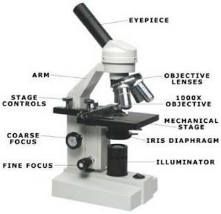 The basic parts of a compound microscope which are labelled in the picture