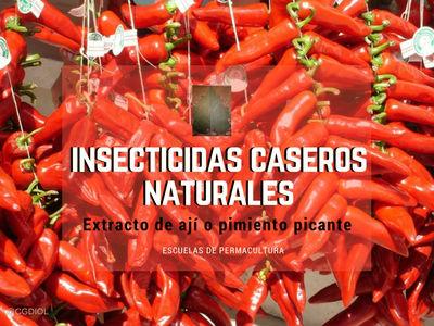 Este es otro tipo de insecticidas naturales caseros hecho con Cayenne