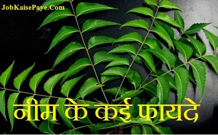 How beneficial is Neem to our life