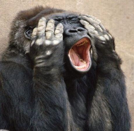 Funny Gorilla Pictures | Funny Animals