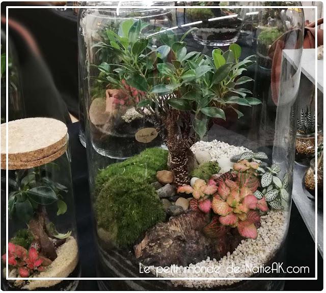 L'échappée verte : terrarium