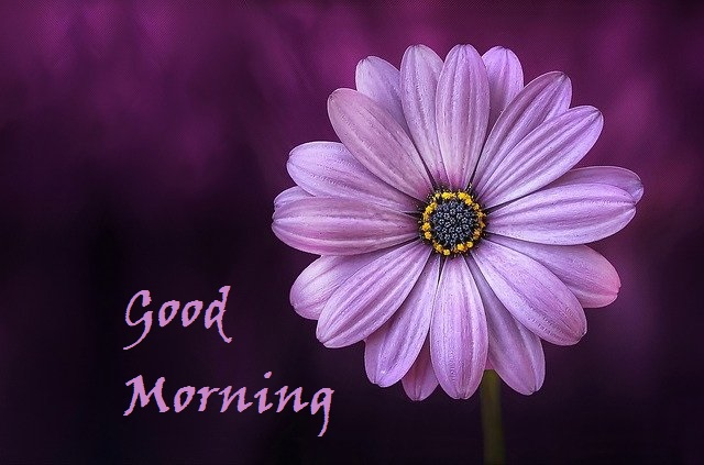Good Morning Nature Images Free Download
