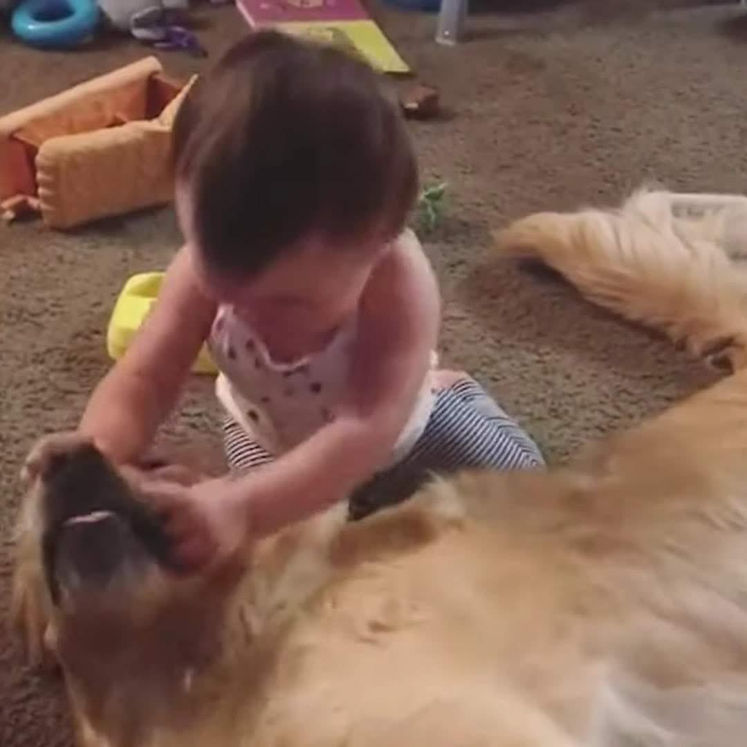 Best Pets Of The Month : 2019年6月に癒やされた微笑ましい動物ビデオの総集編