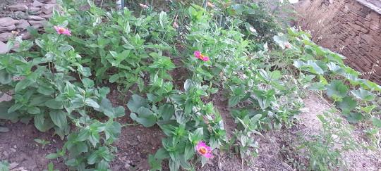 Άνδρος Λαρδιά άνθη στον κήπο