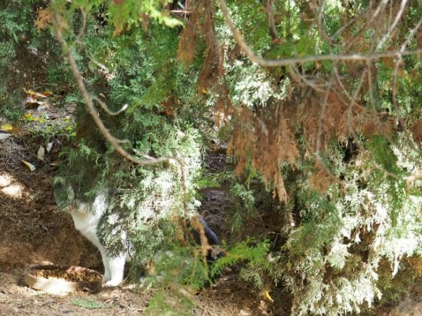 alhambra gato