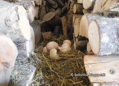 meles meles fauna selvatica nell Appennino Bolognese e Modenese