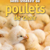 Guide d'élevage semi-intensif de poulets de chair