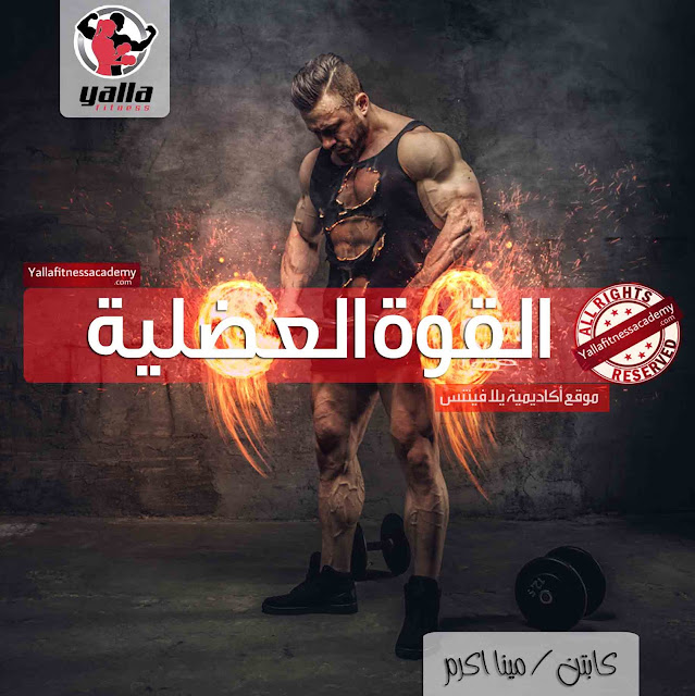القوة العضلية Muscular Strength