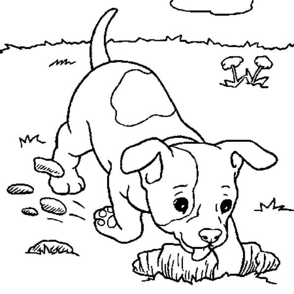 صورة كلب للتلوين