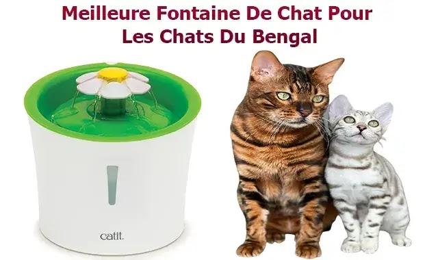 Meilleure Fontaine De Chat Pour Les Chats Du Bengal